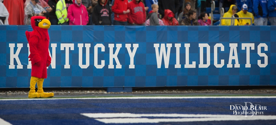 November 28, 2015: Louisville Cardinal watches his team during the 2nd half of the NCAA football game between the Louisville Cardinals and the Kentucky Wildcats at Commonwealth Stadium in Lexington, KY. Louisville defeated Kentucky 38-24. (Photo by David Blair)